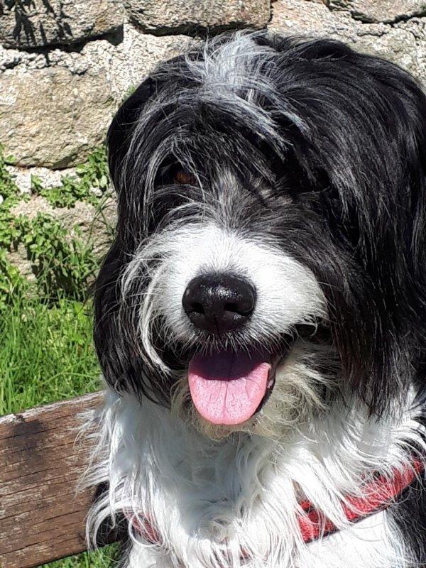 ma chienne Gwendy