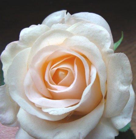 LA    ROSE  THE..