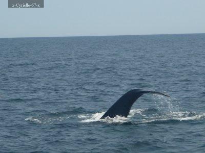 Article 1: Baleine