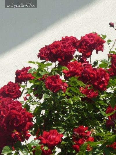 Article 4: Fleurs