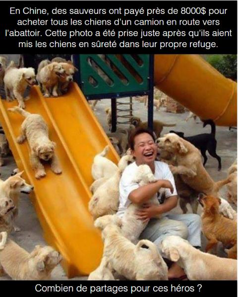 Ces chiens lui doivent la vie .
