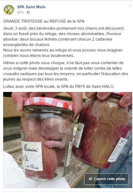 L'horreur à la SPA de Saint Malo
