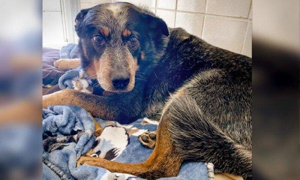 Ce chien fidèle gardait le corps de son maître, mort dans la neige. Il est adopté par une voisine