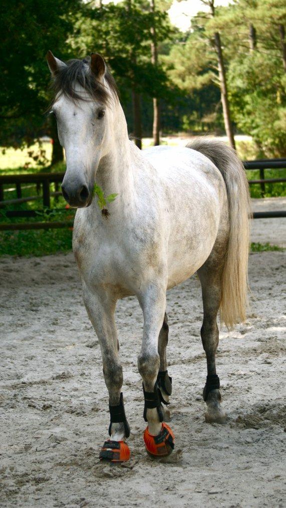 Pony ♥