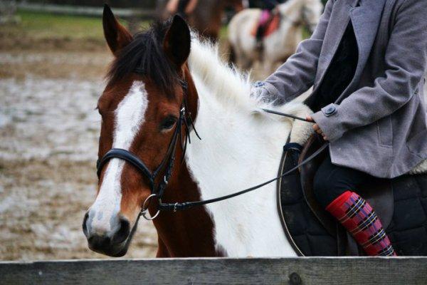 Aujourd'ui pour la première fois, Nora s'est cabrée avec un cavalier sur le dos.