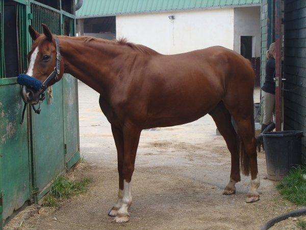 """""""Adaptes toi à ton cheval, plutôt que de vouloir qu'il s'adapte à ta monte."""""""