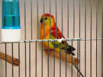 voyage tours mondial oiseaux
