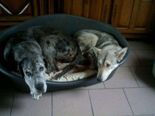 Blog de animauxservices