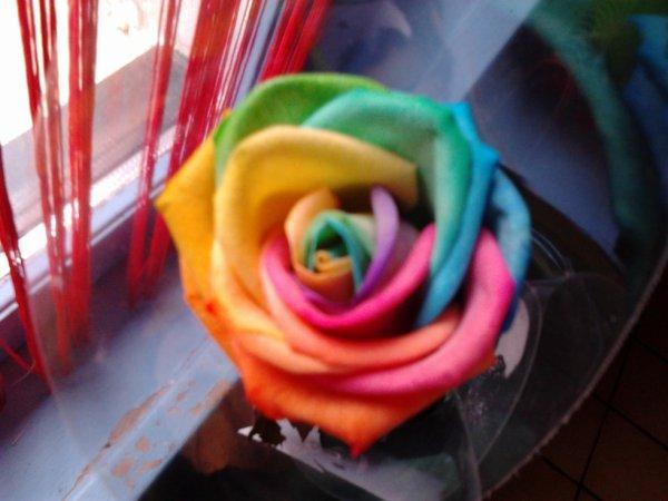 la plus belle rose qu on a pu m offrir !!