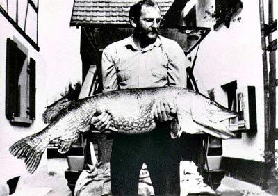 Brochet: Record 150cm pour 25kg Allemagne en 1986/Description/Rapiditée/Taille