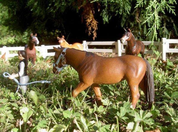 Septembre l'ouverture du ranch