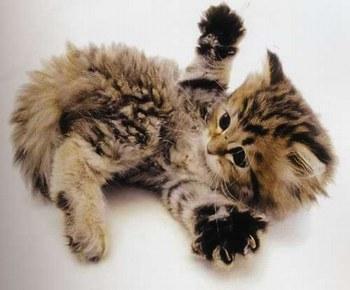 Chaton mimi moi - Images de chats rigolos ...