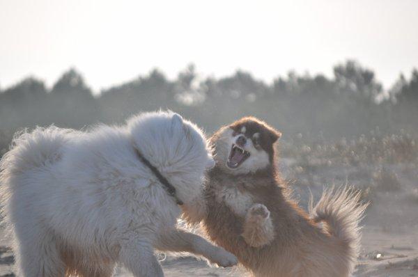 3 mars 2013 - Carambolage & bagarre de chiens féroces...