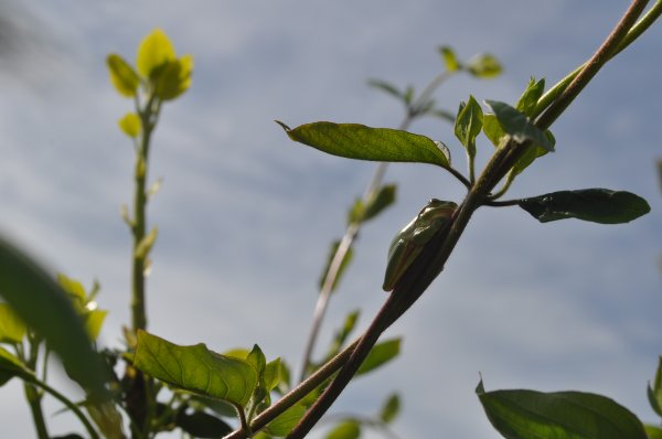 16 avril 2013 - Voisines de buissons...