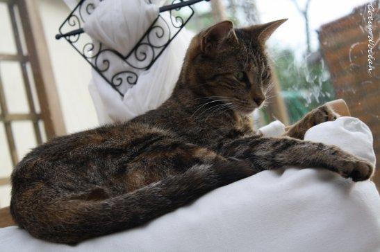 Suite : Cats