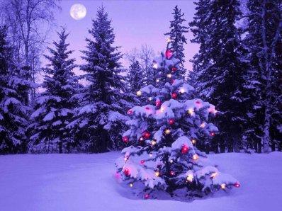 Notre sélection Noël !!