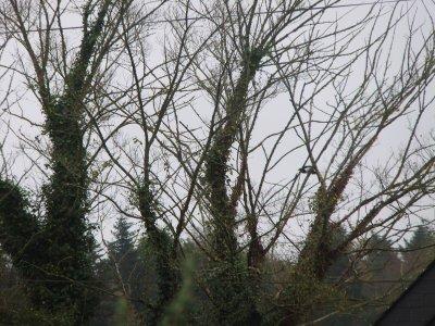 L'hiver 2011.