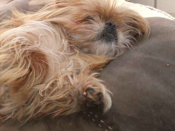 Ma chienne ♥♥♥♥