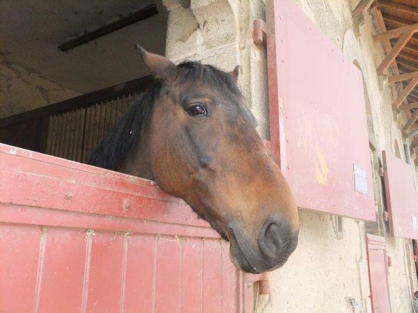 Photos de quelques chevaux <3 !