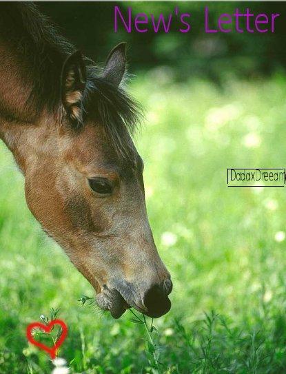 """"""" Le meilleur moyen d'aimer un cheval est de se dire qu'on pourrait le perdre. """""""