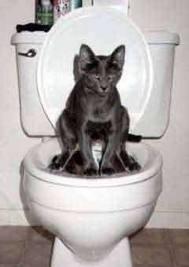 chat au wc