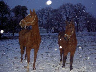 il neige ... :D