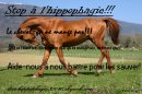 Photo de Stop-Hippophagie-38090