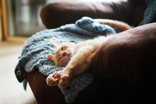 THE CAT !!