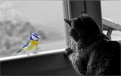 THE CAT 2