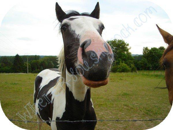 ► Je recherche ce cheval ◄