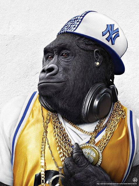 cherche beau gorille