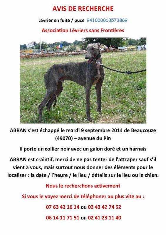 Animal perdu - Abran