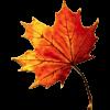 ★ Vive l'automne! ★