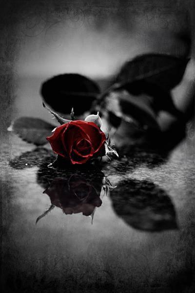 Roses Noires Blog De Angelique5004