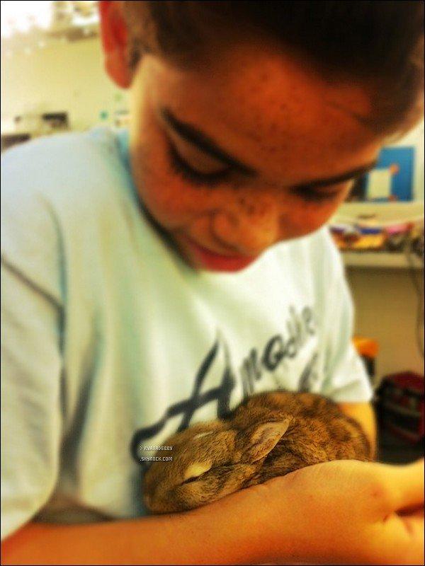 . Découvrez quatres magnifique photos provenant du Twitter de notre superbe Debby !  Debby aurait trouvé ce lapin et l'aurait nommé Casanova. On apprend également que c'est un nouveau membre de la Famille de Jessie.  .