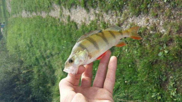 Fish d'automne !