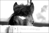 Photographic-captures