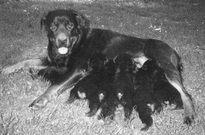 La pépette et ses bébés