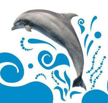 description générale d'un dauphin