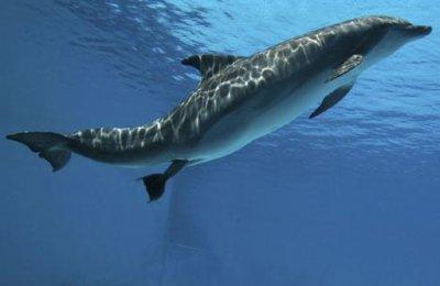 la naissance du dauphin:l'accouchement