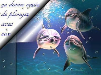 organisation sociale du dauphin