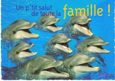 la vie quotidienne du dauphin:la journée du dauphin
