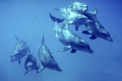 territoire des dauphins:les dauphins chassent en groupe et ils vivent en tribu