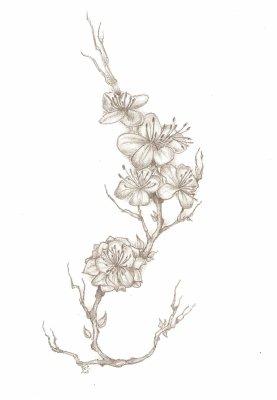 Branche Cerisier Japonais Dessin Gamboahinestrosa