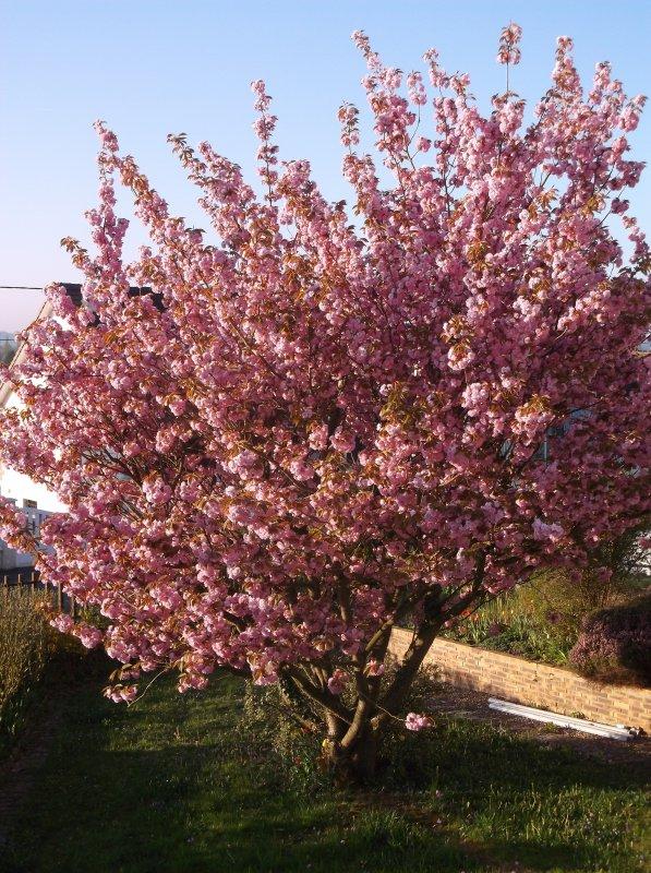 # C'est beau le printemps #