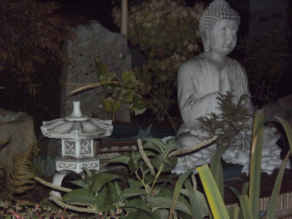 PHOTO NOCTURNE DU PARTERRE SURELEVER A BONSAI
