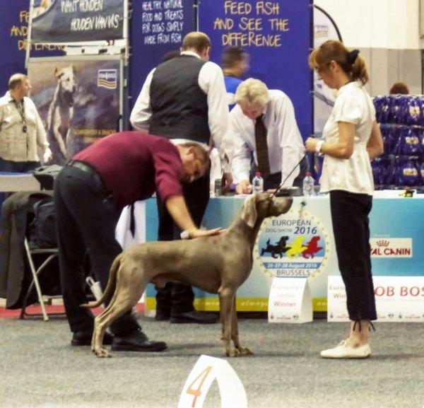 Vinci 4e Exc à l'Euro Dog show Brussels