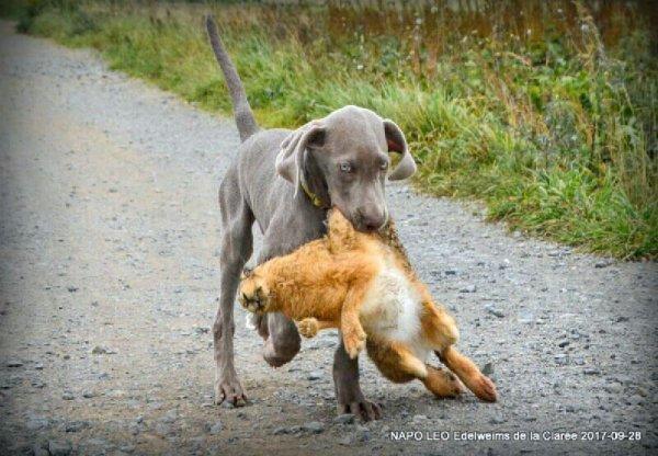 Petit Leo, je revais d'une vie de chasseur pour lui !