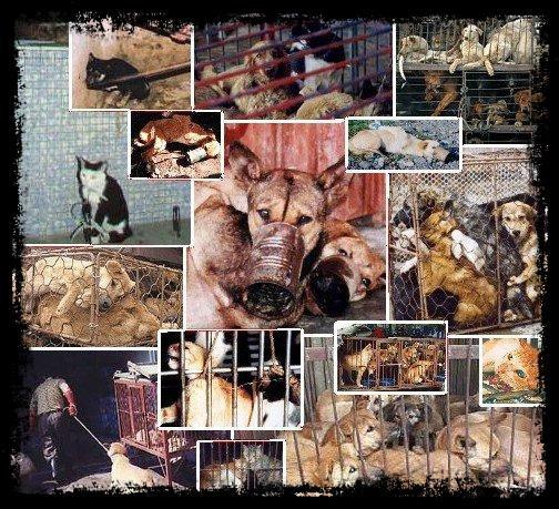 Lutte contre la misére animal