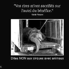 Dite NON au cirque avec animaux